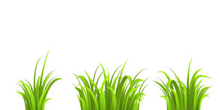 Grass three bushes. Islated on white background Royalty Free Stock Images