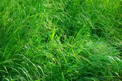 Grass after thunderstorm Stock Photo