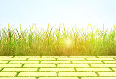 The grass and tile are lit with a sunlight. Stock Photo