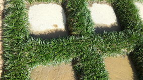 Grass and Tiles. An overhead view of the grass growing around tiles on the sidewalk Stock Photography