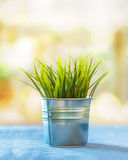 Grass in a tin pot with bokeh in a home interior Royalty Free Stock Photography