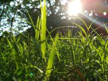 Grass to the sky stock photography