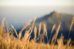 Grass on the top of the mountain. On the top of the autumn Stock Images