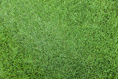 Grass top view. Cut grass seen from above royalty free stock photo