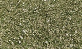 Grass top view Royalty Free Stock Images