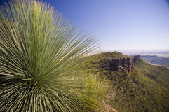 Grass Tree Stock Photo