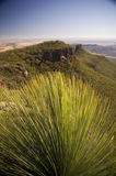 Grass Tree. (xanthorrhoea or black boy) shows its sharp, pointy spikes royalty free stock photos