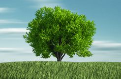 Grass and tree Royalty Free Stock Image