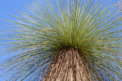 The Grass Tree Stock Photos