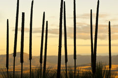 Grass Tree Background Stock Images