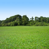 Grass and tree on blue sky. Green grass field with trees on blue sky Royalty Free Stock Images
