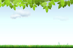 Grass, tree branch and sky with clouds Stock Photo