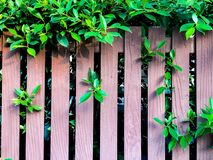 Grass and tree branches on brown lath wall background stock photography