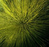 Grass Tree Detail Stock Photo