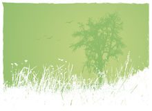Grass with tree on green bgr. Royalty Free Stock Photography
