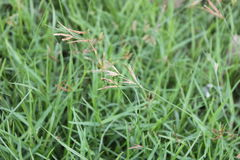 Grass of tree royalty free stock photography