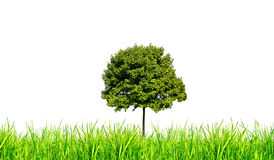 Grass and tree isolated Royalty Free Stock Photo