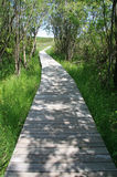 Grass and Tree Lined Boardwalk Royalty Free Stock Images