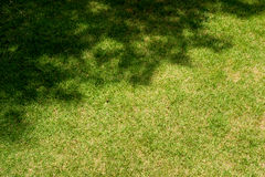 Grass with tree shadow Royalty Free Stock Images