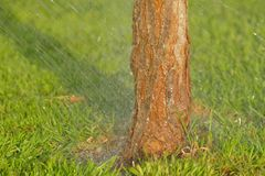Grass, Tree, Trunk, Leaf royalty free stock photo