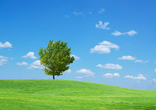Grass and trees Royalty Free Stock Image