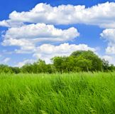 Grass and trees Royalty Free Stock Photography