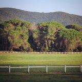 Horse training circle Royalty Free Stock Photos
