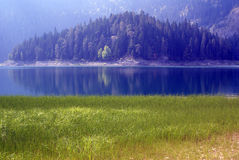 Grass, trees and lake Royalty Free Stock Photo