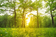Grass and trees in the park illuminated backlit sunlight Royalty Free Stock Photography