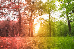 Grass and trees in the park illuminated backlit sunlight toned in red-green gradient Stock Images