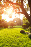 The grass and trees in the park Royalty Free Stock Images