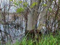 Flooded wetland in springtime stock photos
