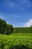 Grass and trees Wall (shrubbery) Stock Image