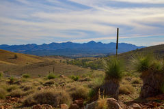 Grass trees and Wilpena pound. A distant view of Wilpena Pound in the Flinders Ranges of South Australia Royalty Free Stock Image