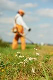 Grass trimmer works concept. Young worker with power tool string lawn trimmer mower cutting grass near road. Focus on camomile Royalty Free Stock Image