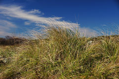 Grass Tuft. The edge of the sandy shore along the ocean Stock Photo
