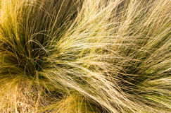 Grass tuft Royalty Free Stock Image