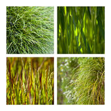 Grass and tufts Stock Photos