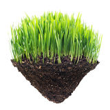 Grass and turf Stock Images