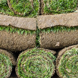 Grass turf Royalty Free Stock Images