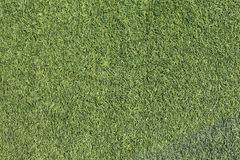 Grass turf texture background Stock Image