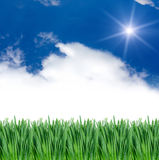 Grass under blue sky Stock Images