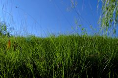 Grass. The grass under the blue sky is very Royalty Free Stock Photos