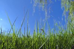 Grass. The grass under the blue sky is very Stock Photos