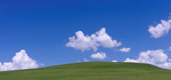 The grass under the blue sky and white cloud Stock Image