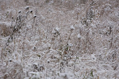 Grass under a first snow Stock Photography