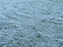 Grass under the hoar-frost Stock Images
