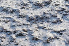 Grass under the snow Stock Image