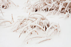 Grass under snow. Royalty Free Stock Photo