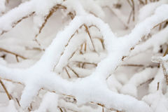 Grass under snow. Stock Images